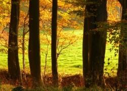 Herbstwald_Rand_mit_Buchen