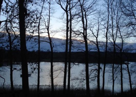 Schierensee_Winter_Baeume