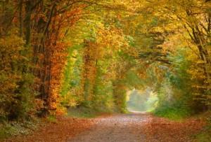 Redder_im_Herbst